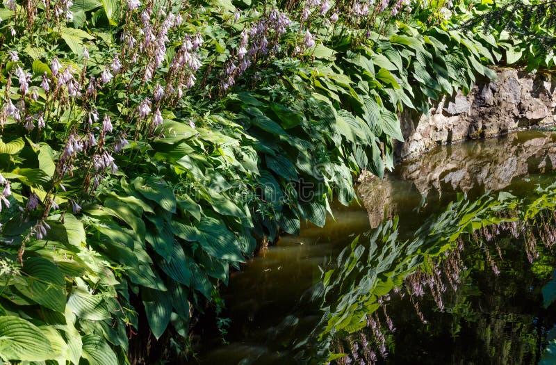 De kleine oppervlakte van het de zomermeer met groene installatiesbezinningen royalty-vrije stock afbeelding