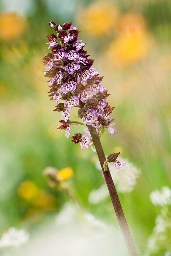 De kleine orchidee van het detail royalty-vrije stock foto's