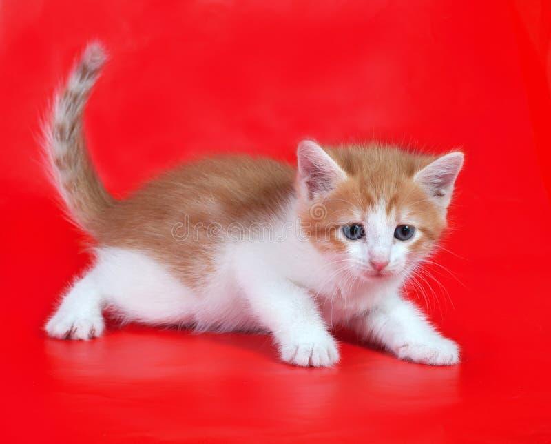 De kleine pluizige gember en het witte katje liggen op rood royalty-vrije stock foto's