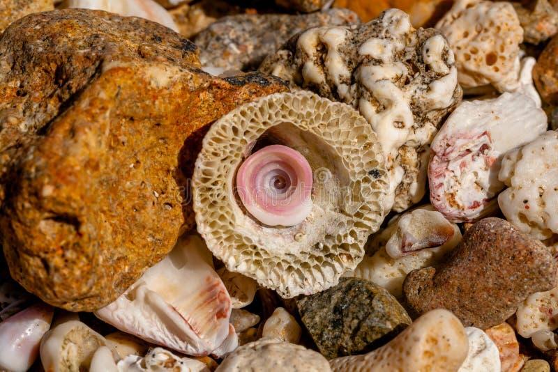 De Kleine Rest Shell in een Grote Zeeschelp en Kiezelstenen en Koralen van Egypte royalty-vrije stock afbeelding