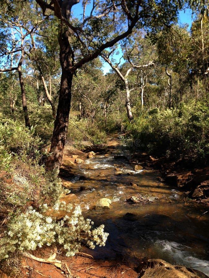 De kleine rivierkreek die door bos in Lesmurdie vloeien valt Nationaal Park, Westelijk Australië royalty-vrije stock afbeeldingen