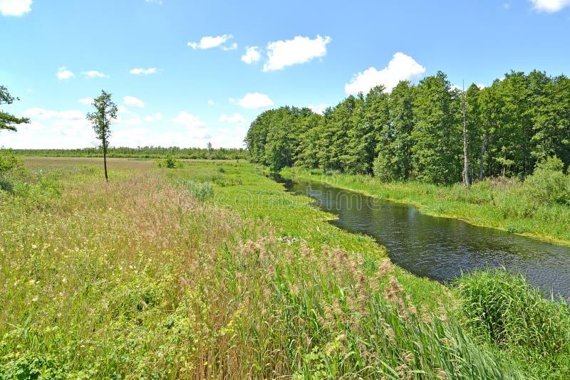 De kleine rivierweide in de zomer zonnige dag Het gebied van Kaliningrad royalty-vrije stock afbeeldingen