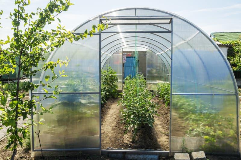 De kleine serre in een tuin met de volwassenetomaten, de komkommers en de paprika Conceptie van gezonde voedsel en eco royalty-vrije stock fotografie