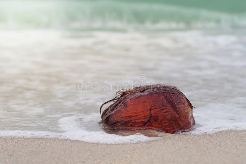 De kleine voetafdruk is gestempeld op het strand stock foto's