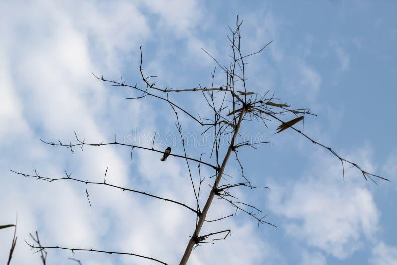 De kleine vogel op de boom, de achtergrond is hemel royalty-vrije stock afbeelding