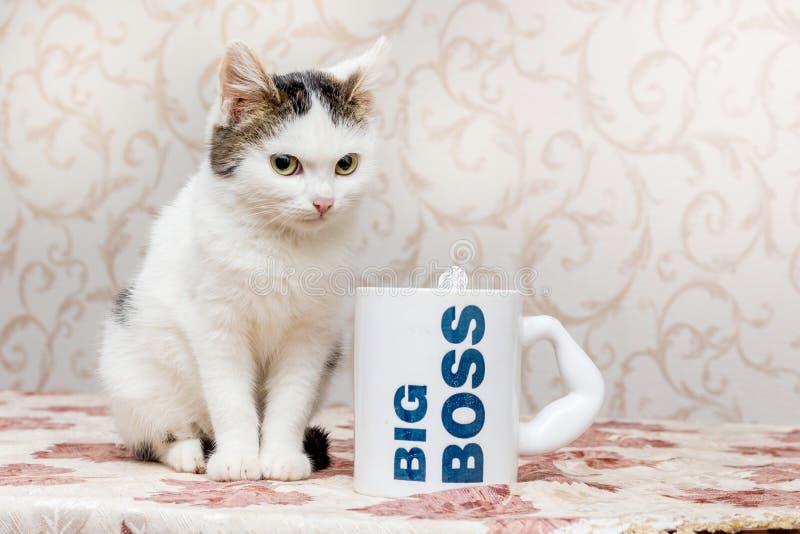 De kleine witte kat zit naast een mok met inschrijvings grote bos stock afbeeldingen