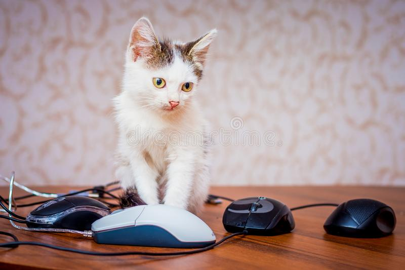 De kleine witte kat zit op een lijst onder computer mouses_ royalty-vrije stock afbeelding