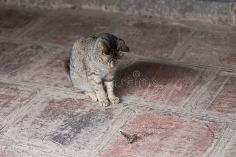De kleine zitting die van de tijgerkat zijn grote mottenprooi waarnemen royalty-vrije stock foto