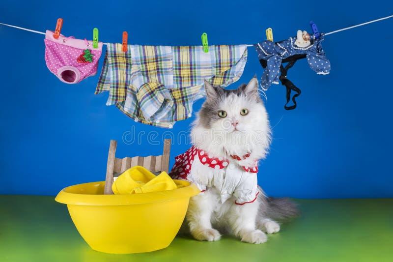 De kleren van de kattenwas in het bassin stock afbeeldingen