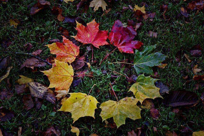 De kleur van bladerendraaien van groen tot geel en aan stock afbeelding