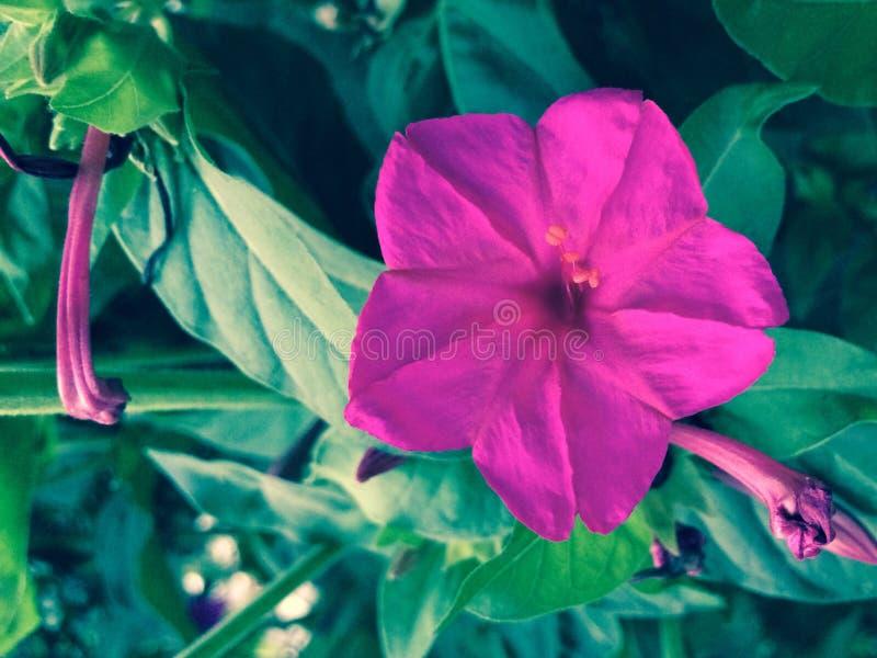 de kleur van bloemencolorfy royalty-vrije stock fotografie