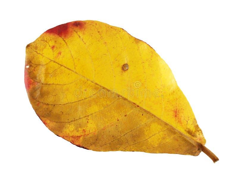 De kleur van de bladerenverandering royalty-vrije stock afbeelding
