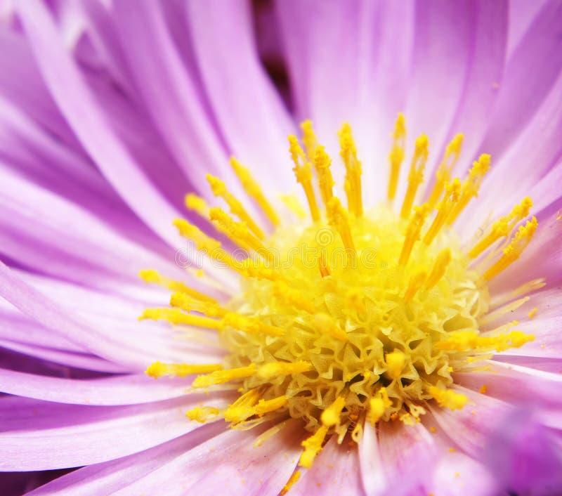 De Kleur van de bloem stock foto's
