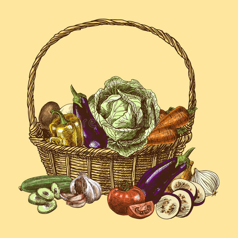 De kleur van de groentenschets stock illustratie