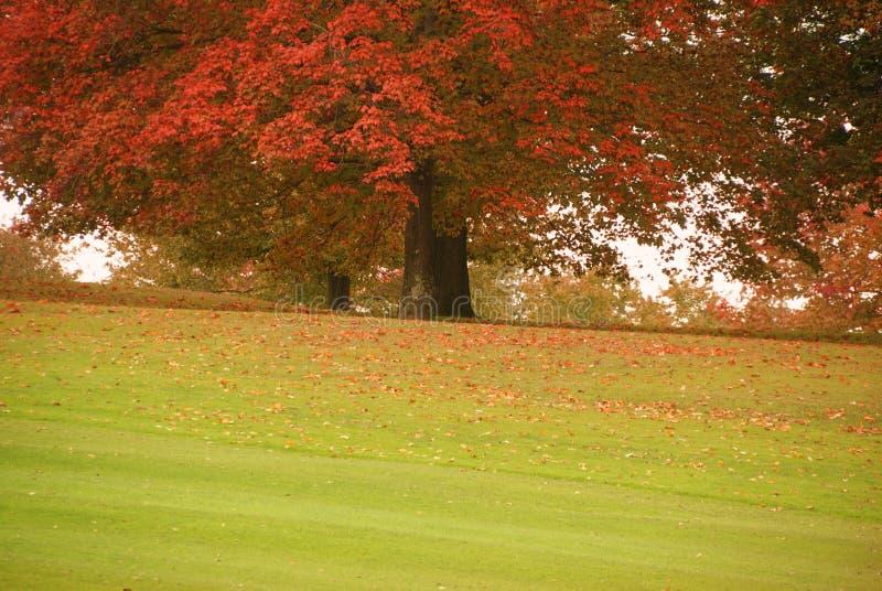 De Kleur van de herfst royalty-vrije stock afbeeldingen