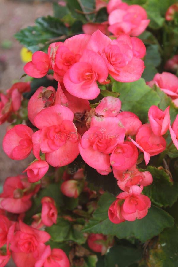De kleur van deze uiterst kleine bloei nodigt uit stock foto
