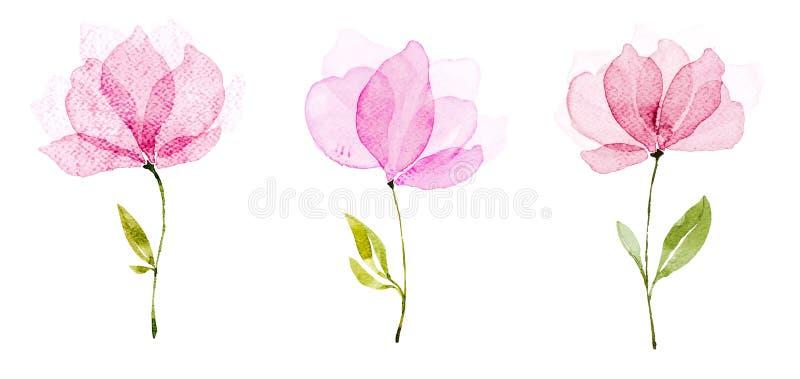 De kleur van het beeldwater, hand trekt, zijn de Bloemen lichtrode drie meningen royalty-vrije illustratie
