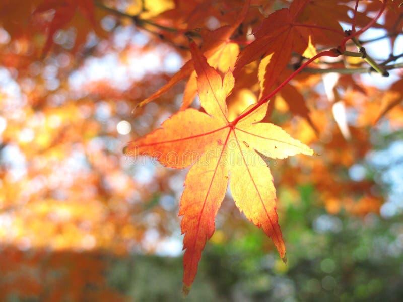 De kleur van het de herfstblad in Hiroshima stock foto's