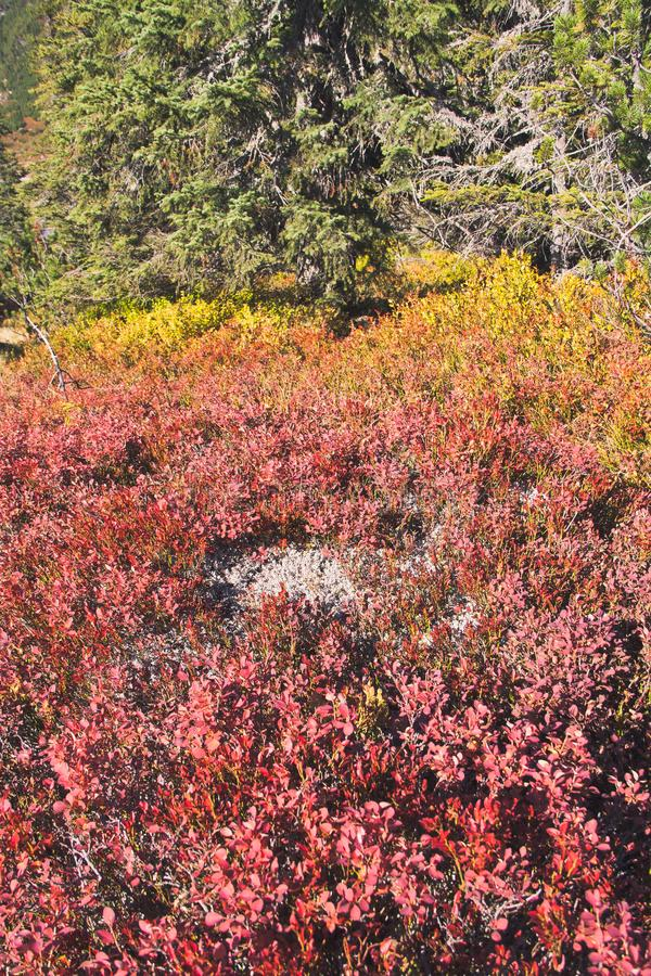De kleuren van de bergherfst royalty-vrije stock afbeeldingen