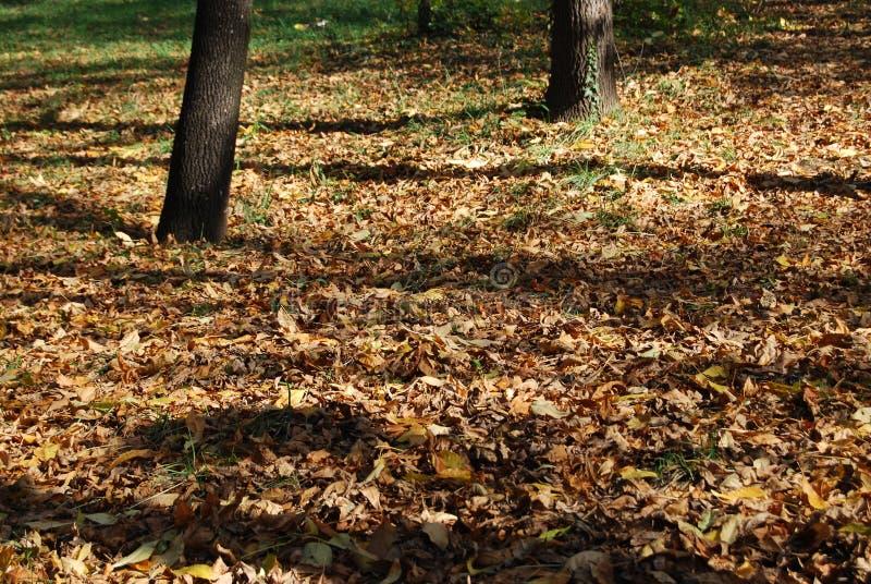 Dalingskleuren bij het park stock foto's