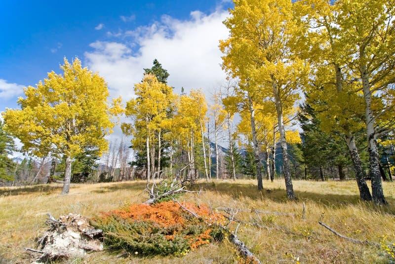 De Kleuren van de Daling van de herfst stock foto's