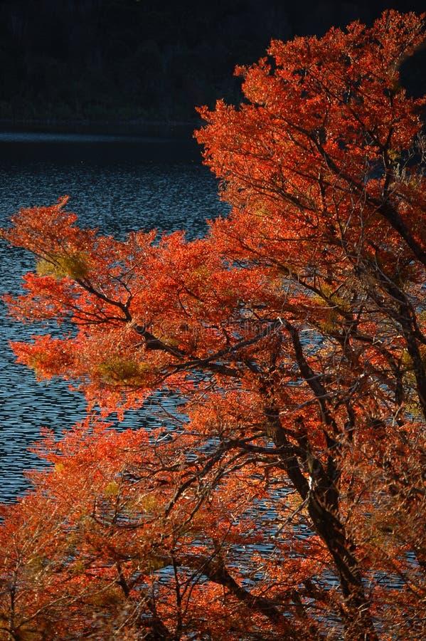 De kleuren van de herfst royalty-vrije stock foto