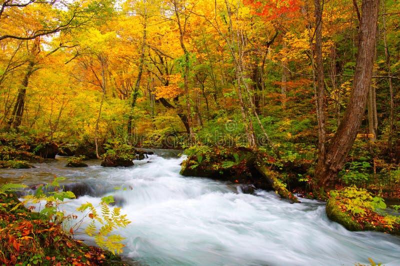 De Kleuren van de herfst van Rivier Oirase stock afbeelding