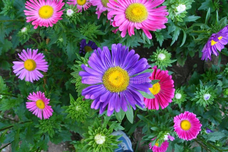 De kleuren van de lente stock afbeeldingen