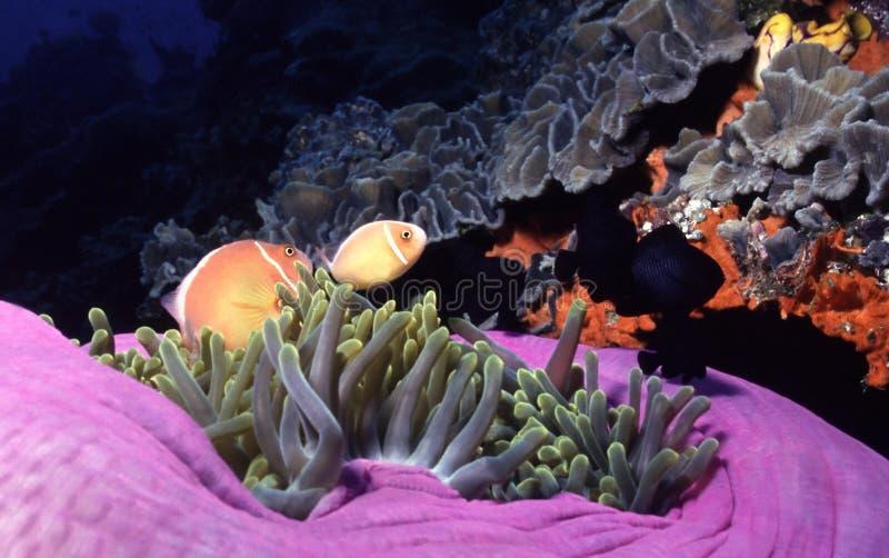 De Kleuren van de Oceaan van de moeder royalty-vrije stock foto