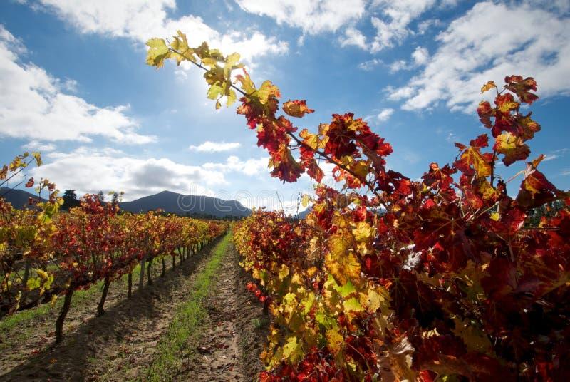 De kleuren van de wijnstok stock afbeeldingen