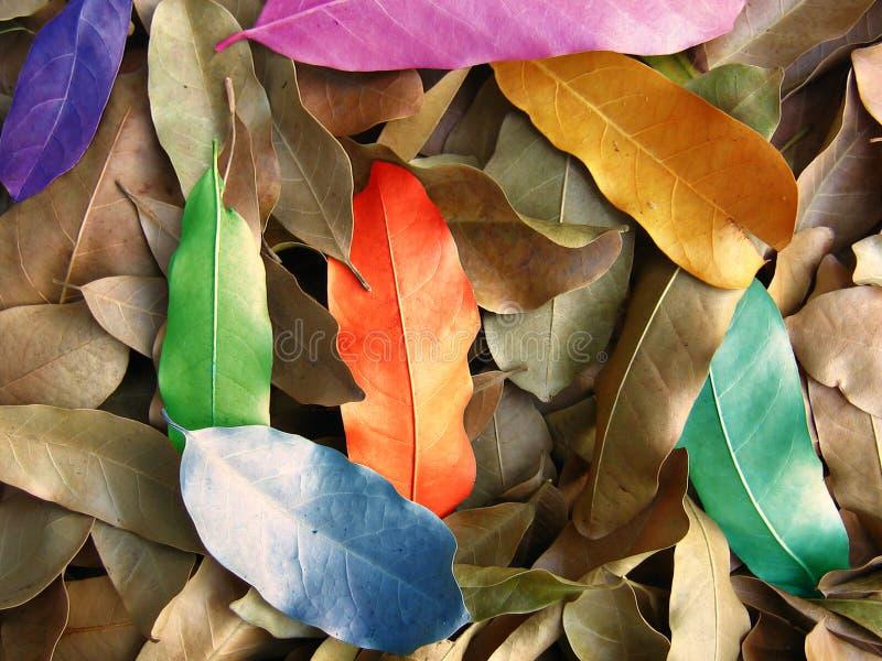 De Kleuren van het blad vector illustratie