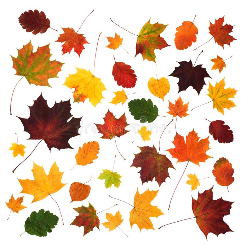 De kleurrijke abstracte geïsoleerde samenstelling van diverse dalingsbladeren stock foto