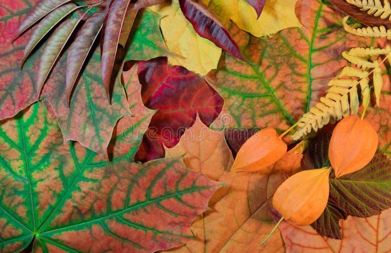 De kleurrijke achtergrond van de herfst De gevallen veelkleurige bladeren royalty-vrije stock afbeeldingen