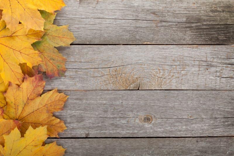 De kleurrijke bladeren van de de herfstesdoorn royalty-vrije stock afbeeldingen