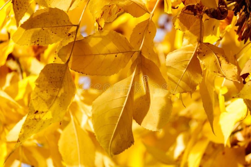 De kleurrijke Bladeren van de Herfst stock foto's