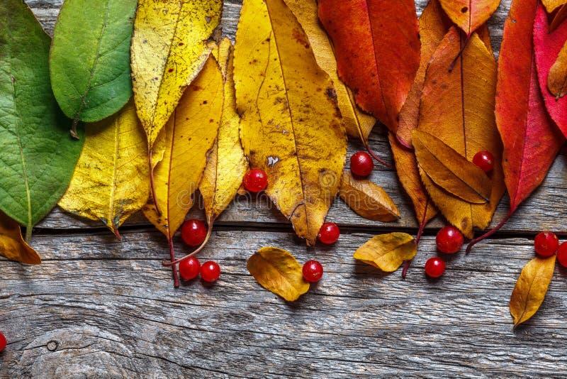De kleurrijke Bladeren van de Herfst royalty-vrije stock afbeelding