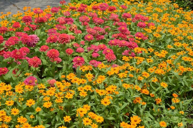 De Kleurrijke Bloemen in de percelen stock foto's