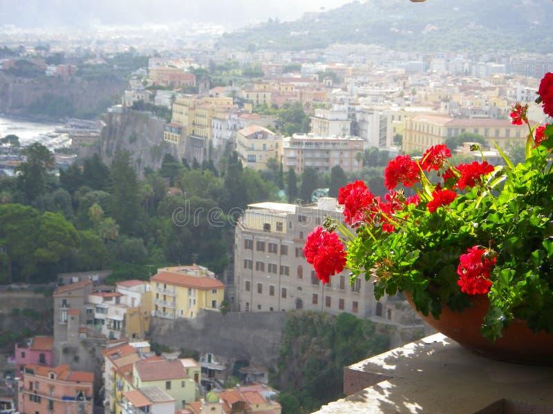 De Kleurrijke Gebouwen van Sorrento Italië met Ingemaakte Geranium stock foto