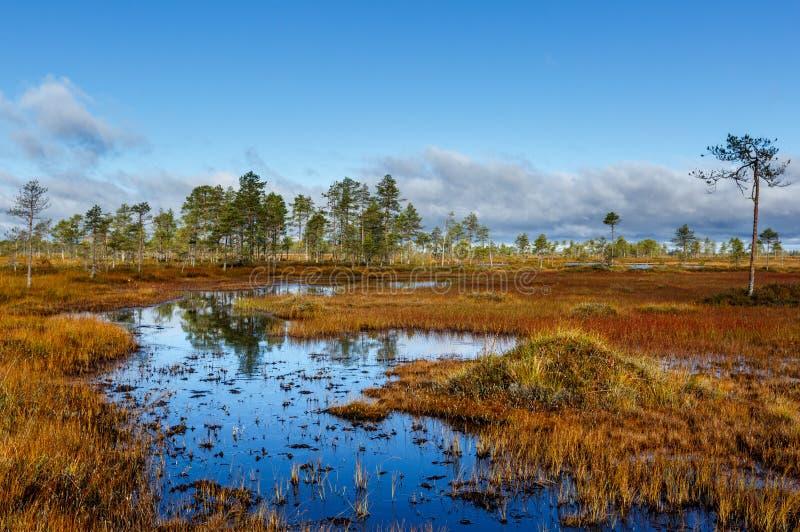 De kleurrijke herfst op het moeras stock foto