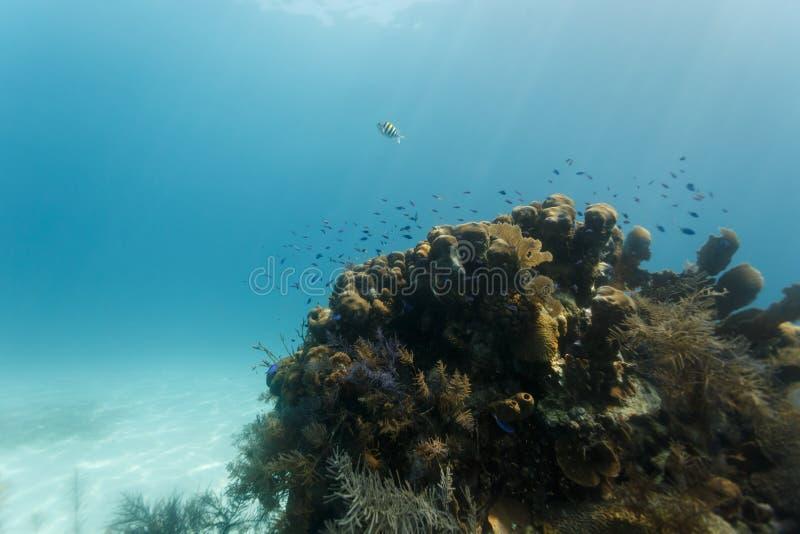 De kleurrijke kleine vissen zwemmen op koraalrif royalty-vrije stock fotografie