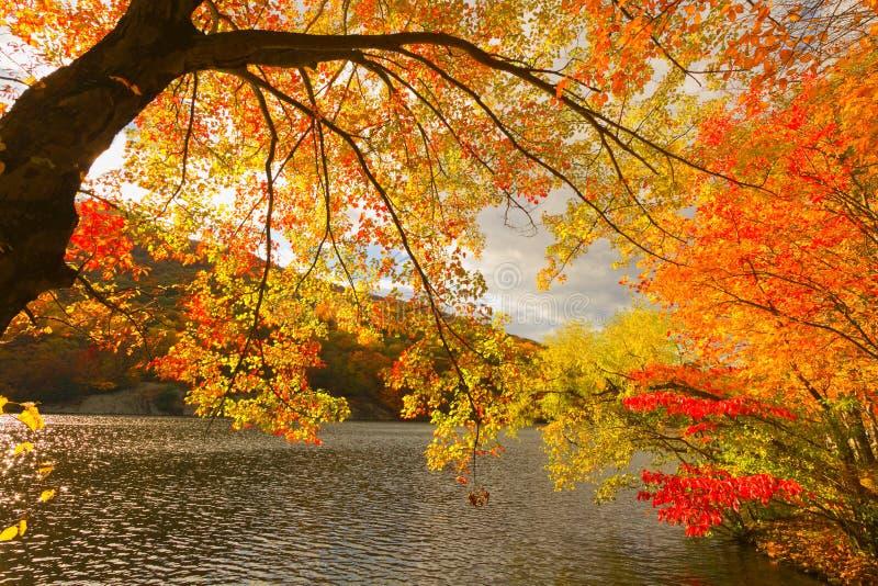 De kleurrijke landschappen van het dalingslandschap stock afbeelding