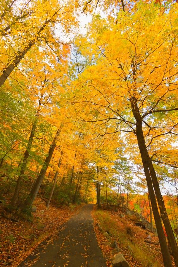 De kleurrijke landschappen van het dalingslandschap stock fotografie