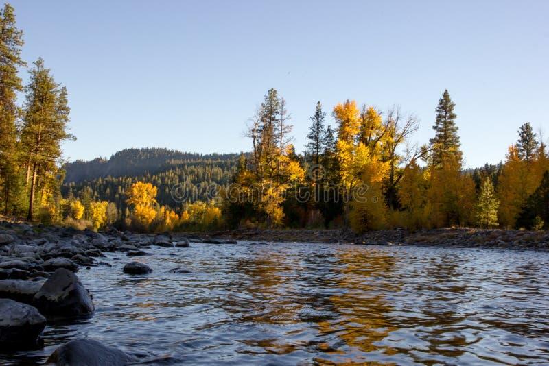 De kleurrijke lijn van de herfstbladeren een koude snel bewegende rivier stock afbeelding