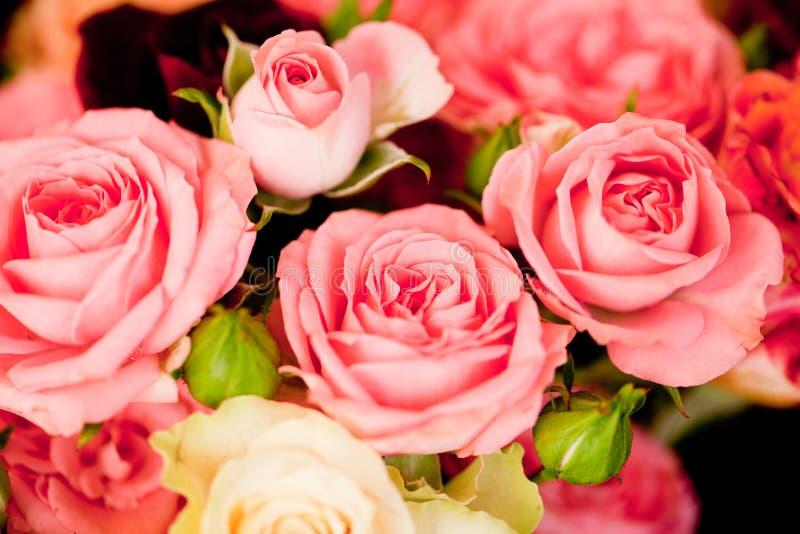 De kleurrijke mooie achtergrond van de de close-upkaart van rozenbloemen macro royalty-vrije stock afbeelding
