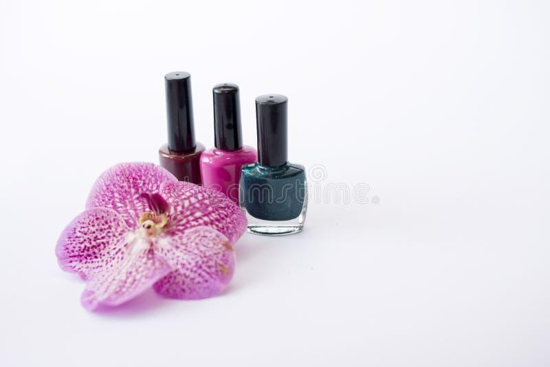 De kleurrijke nagellakken bevinden zich dichtbij mooie roze bloem Professionele cosmetischee producten stock afbeelding