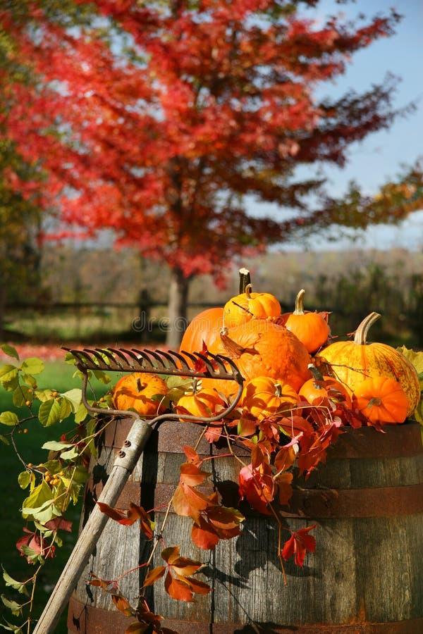 De kleurrijke oogst van de herfst stock afbeeldingen