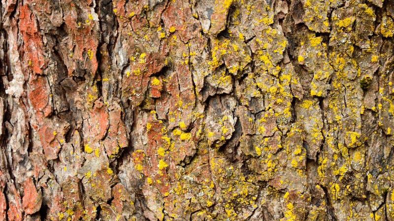 De kleurrijke oude close-up van de boomschors stock afbeelding
