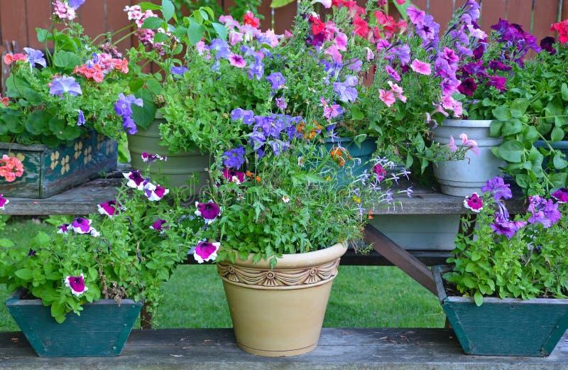 De kleurrijke planters van de de zomerbloem stock foto