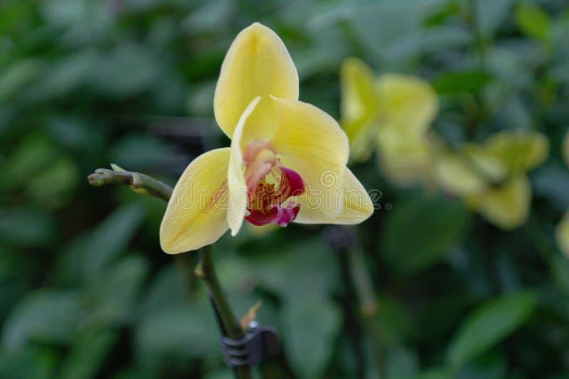 De kleurrijke purpere bloemen van de Orchidee royalty-vrije stock fotografie