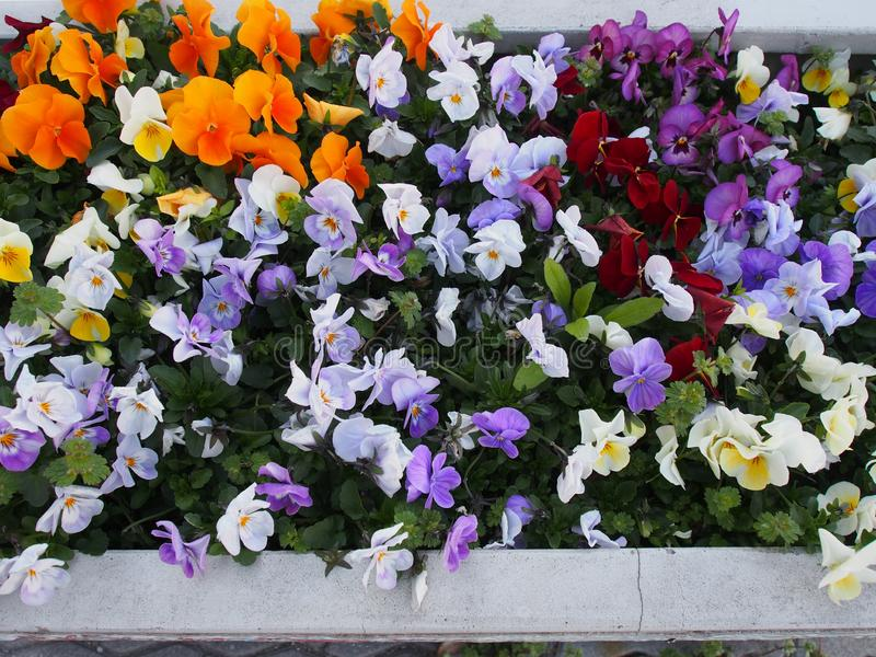 De kleurrijke Straat bloeit Osaka Japan Travel stock fotografie